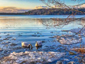 Landskap med snö